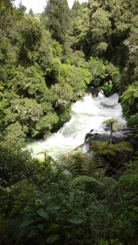 Visit Okere Falls- magnificent New Zealand native vegetation