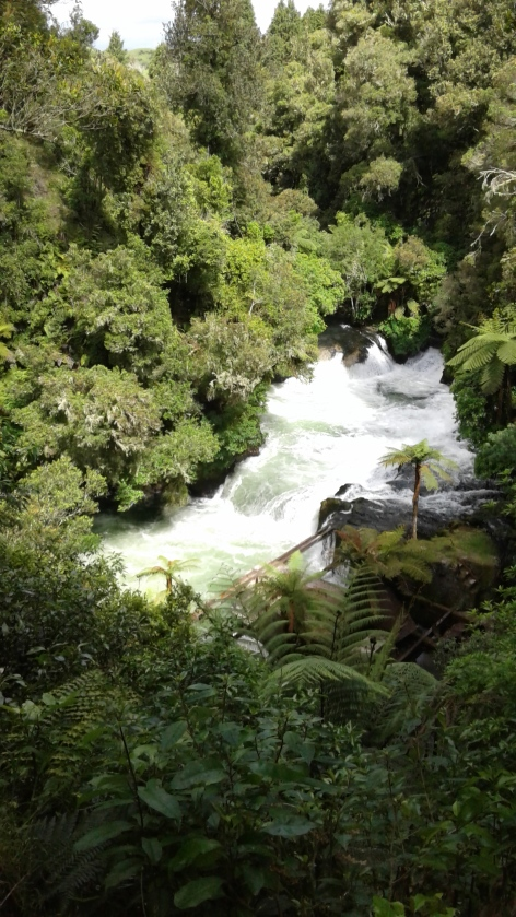 Visit Okere Falls- magnificent New Zealand native vegetation