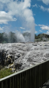 Pohutu Geyser at Te Puia-the largest geyser in the southern hemisphere
